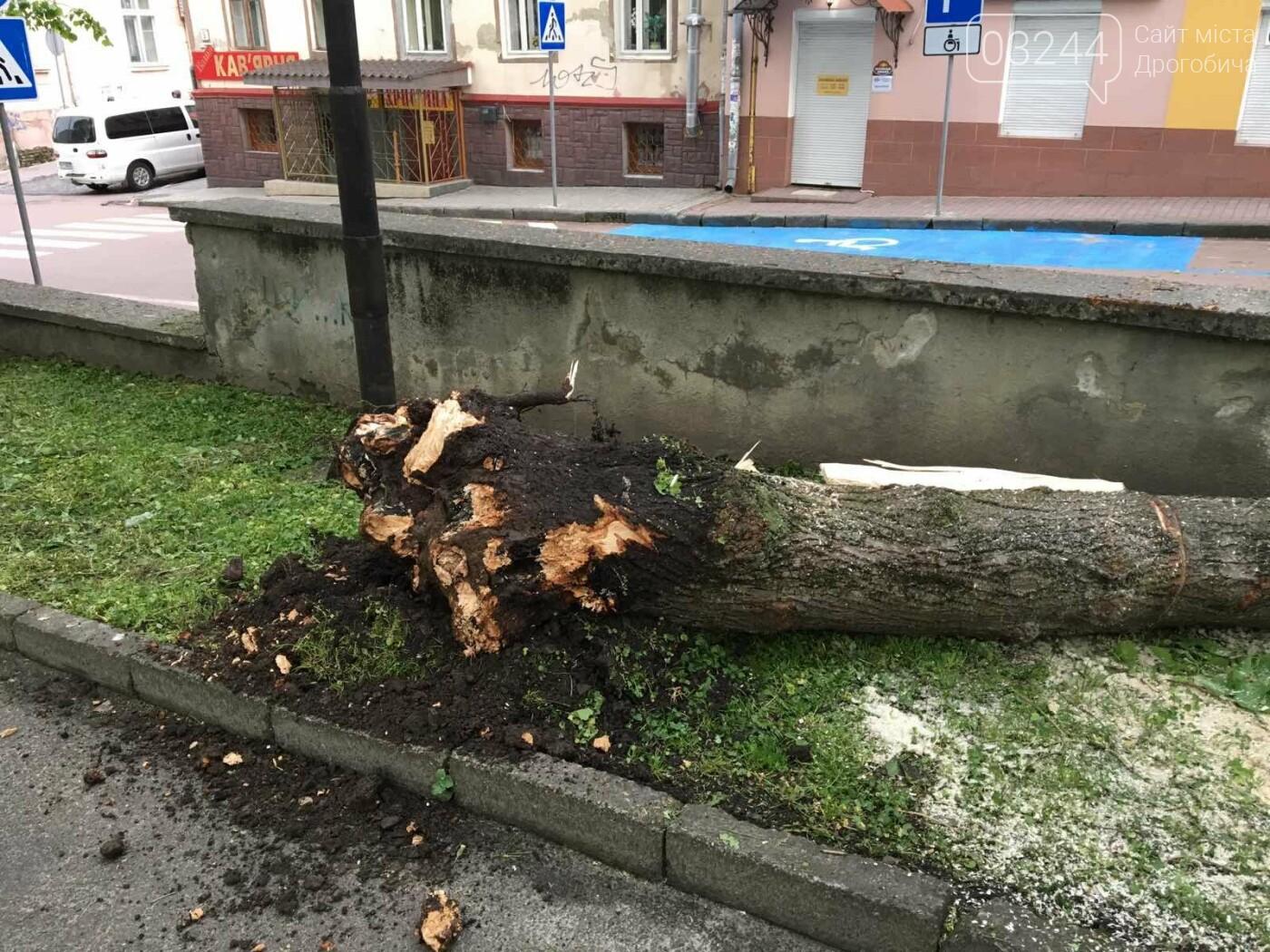 У центральні частині Дрогобича впало дерево, - ФОТО, фото-1