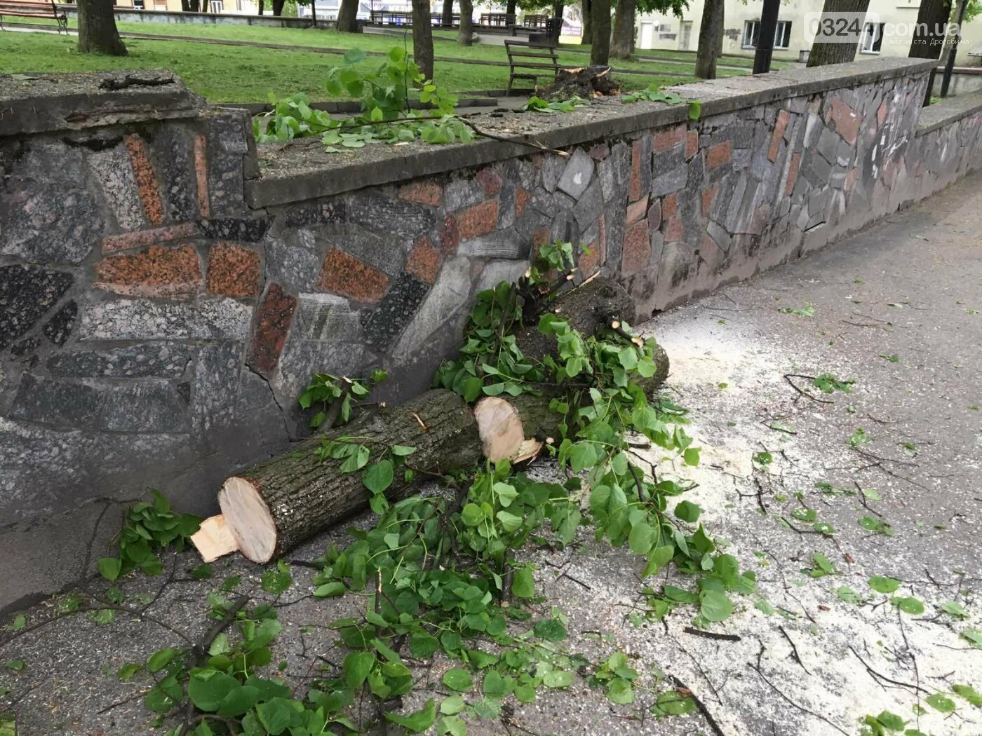 У центральні частині Дрогобича впало дерево, - ФОТО, фото-6