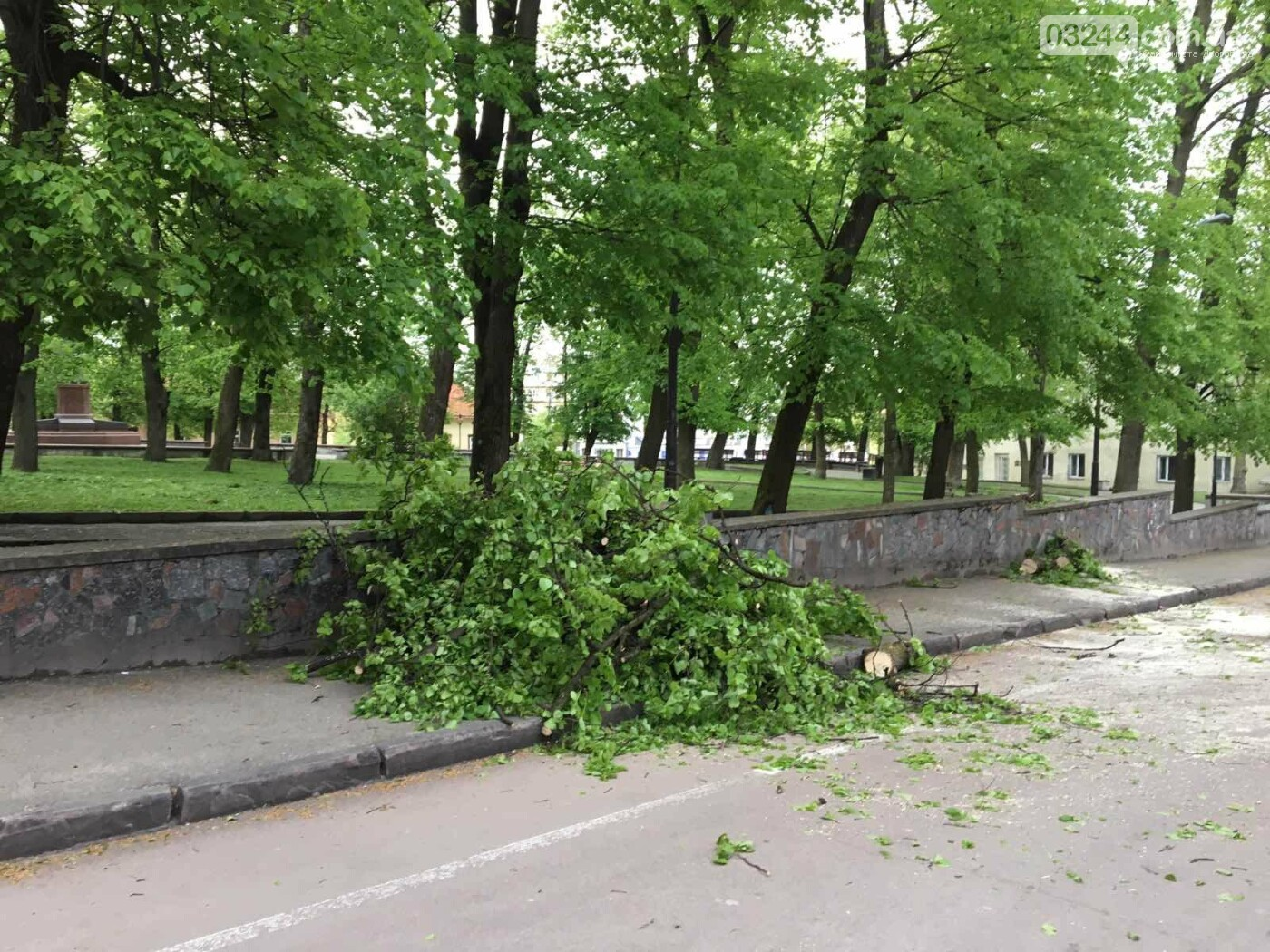 У центральні частині Дрогобича впало дерево, - ФОТО, фото-8