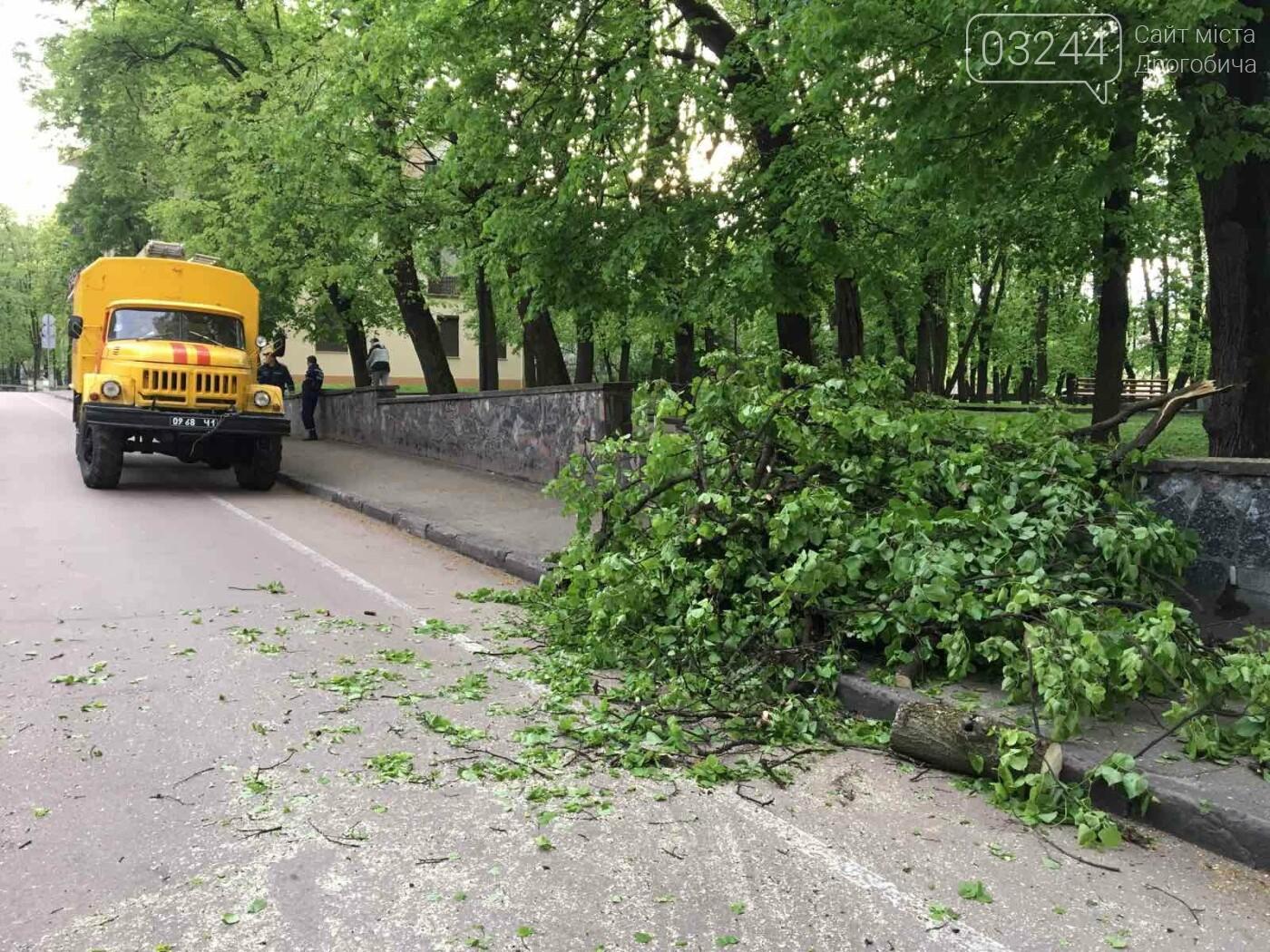 У центральні частині Дрогобича впало дерево, - ФОТО, фото-4