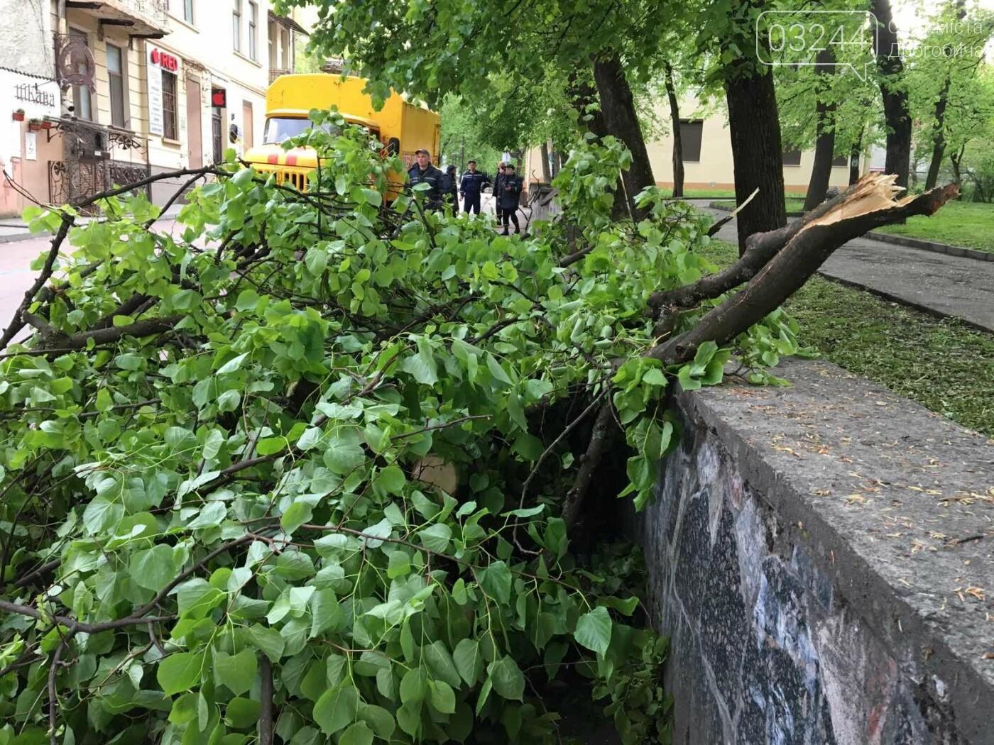 У центральні частині Дрогобича впало дерево, - ФОТО, фото-3