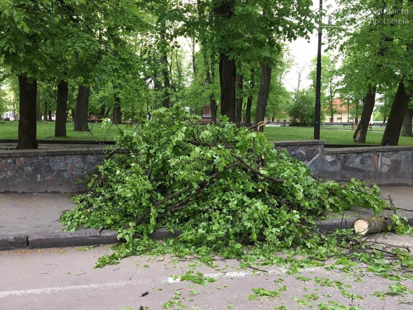 У центральні частині Дрогобича впало дерево, - ФОТО, фото-7