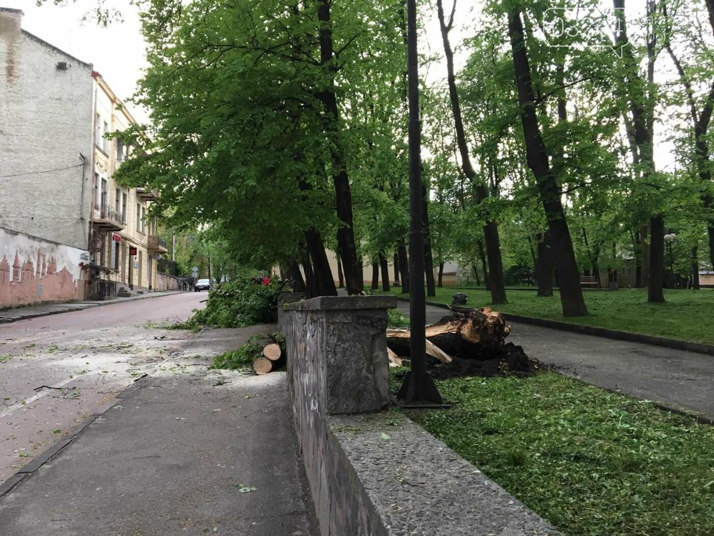 У центральні частині Дрогобича впало дерево, - ФОТО, фото-9
