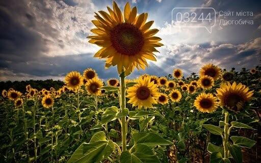29 серпня в Україні відзначають День пам'яті захисників, фото-2