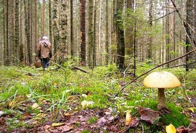 У лісі на Дрогобиччині рятувальники розшукали зниклого грибника, фото-1