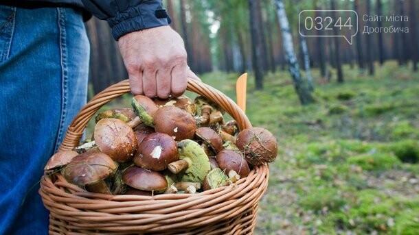 Похід за грибами ледь не завершився ночівлею в лісі – на Дрогобиччині заблукали грибники, фото-1