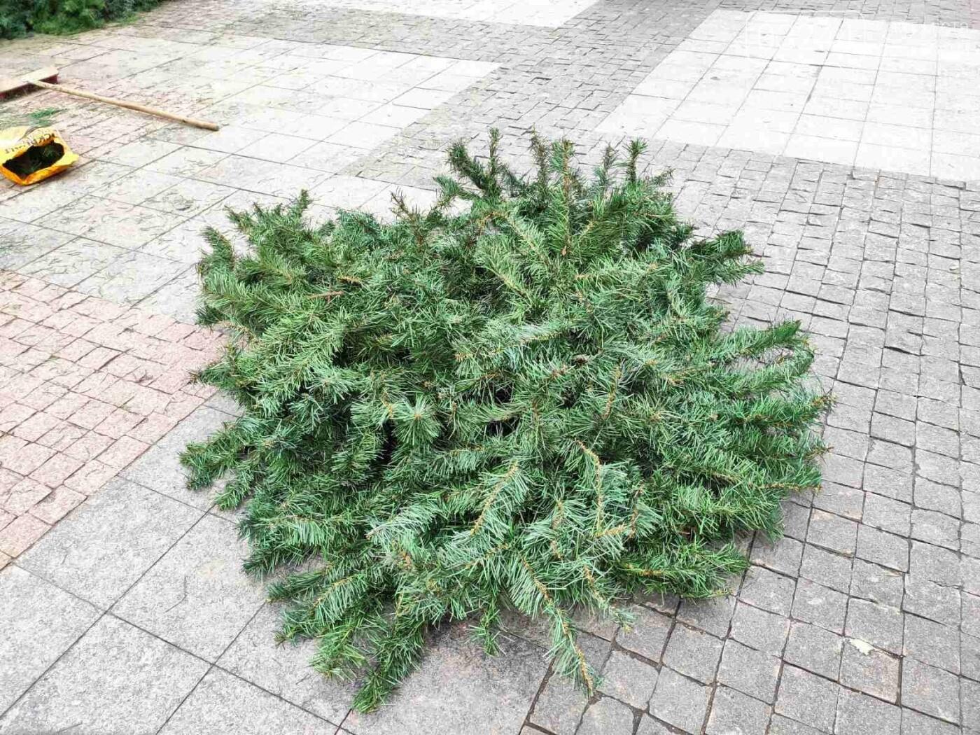 У Дрогобичі встановили новорічну ялинку, - ФОТО, фото-11