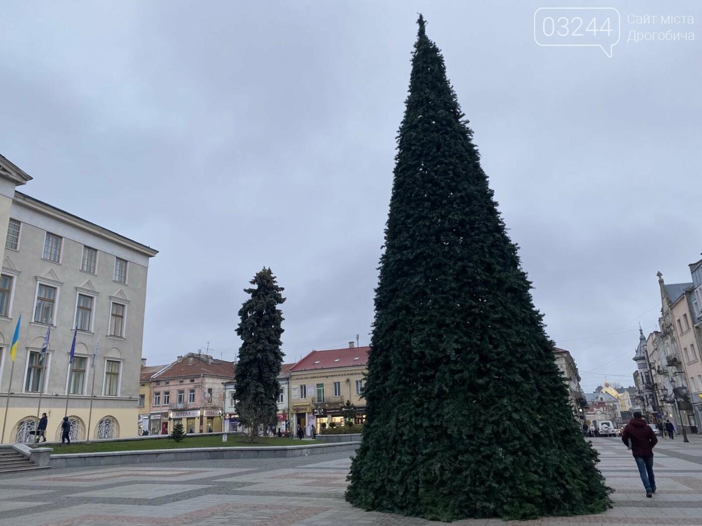 У Дрогобичі встановили новорічну ялинку, - ФОТО, фото-2