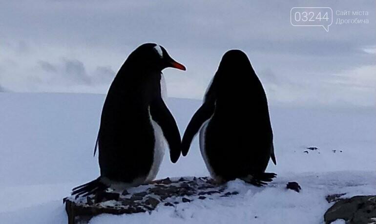 Коронавірус добрався до Антарктиди, там занедужало 36 людей, фото-1