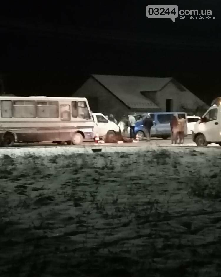 На трасі Київ-Чоп рейсовий автобус збив коня. Тварина загинула на місці, фото-2