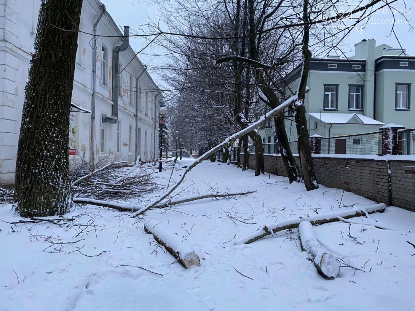 """Фото дня: в парку педуніверситету над алеєю """"повисло"""" дерево, фото-1"""