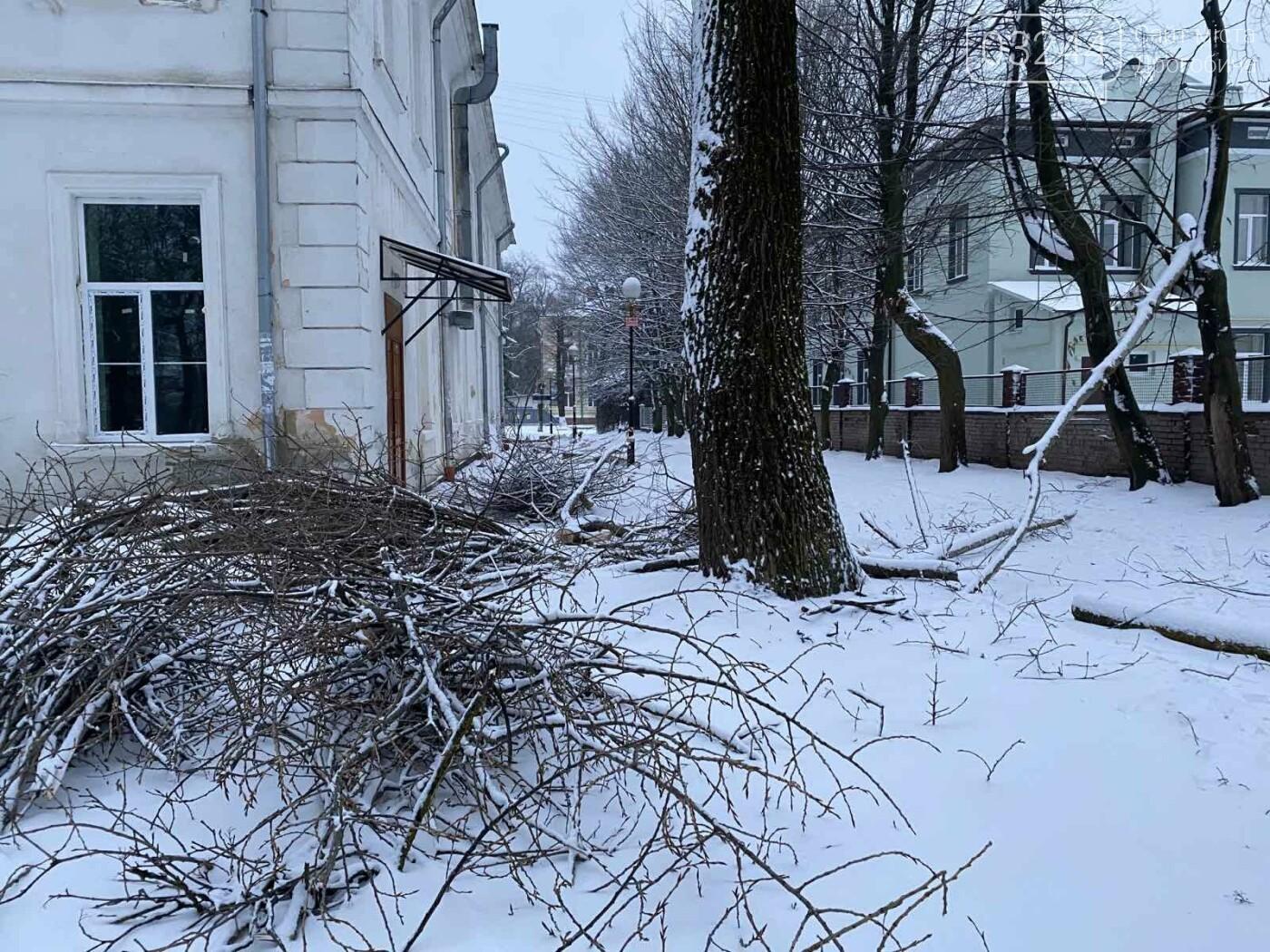 """Фото дня: в парку педуніверситету над алеєю """"повисло"""" дерево, фото-2"""