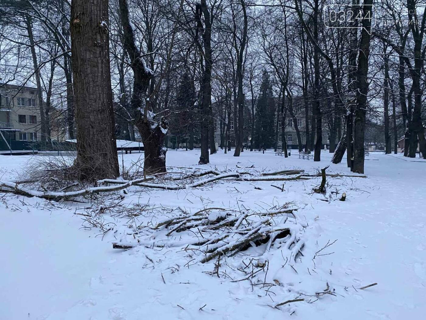 """Фото дня: в парку педуніверситету над алеєю """"повисло"""" дерево, фото-3"""