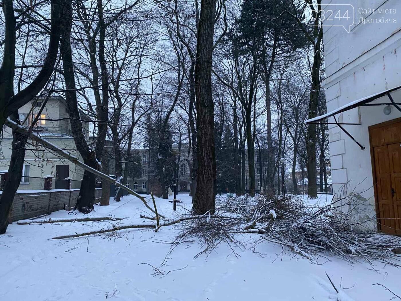 """Фото дня: в парку педуніверситету над алеєю """"повисло"""" дерево, фото-4"""
