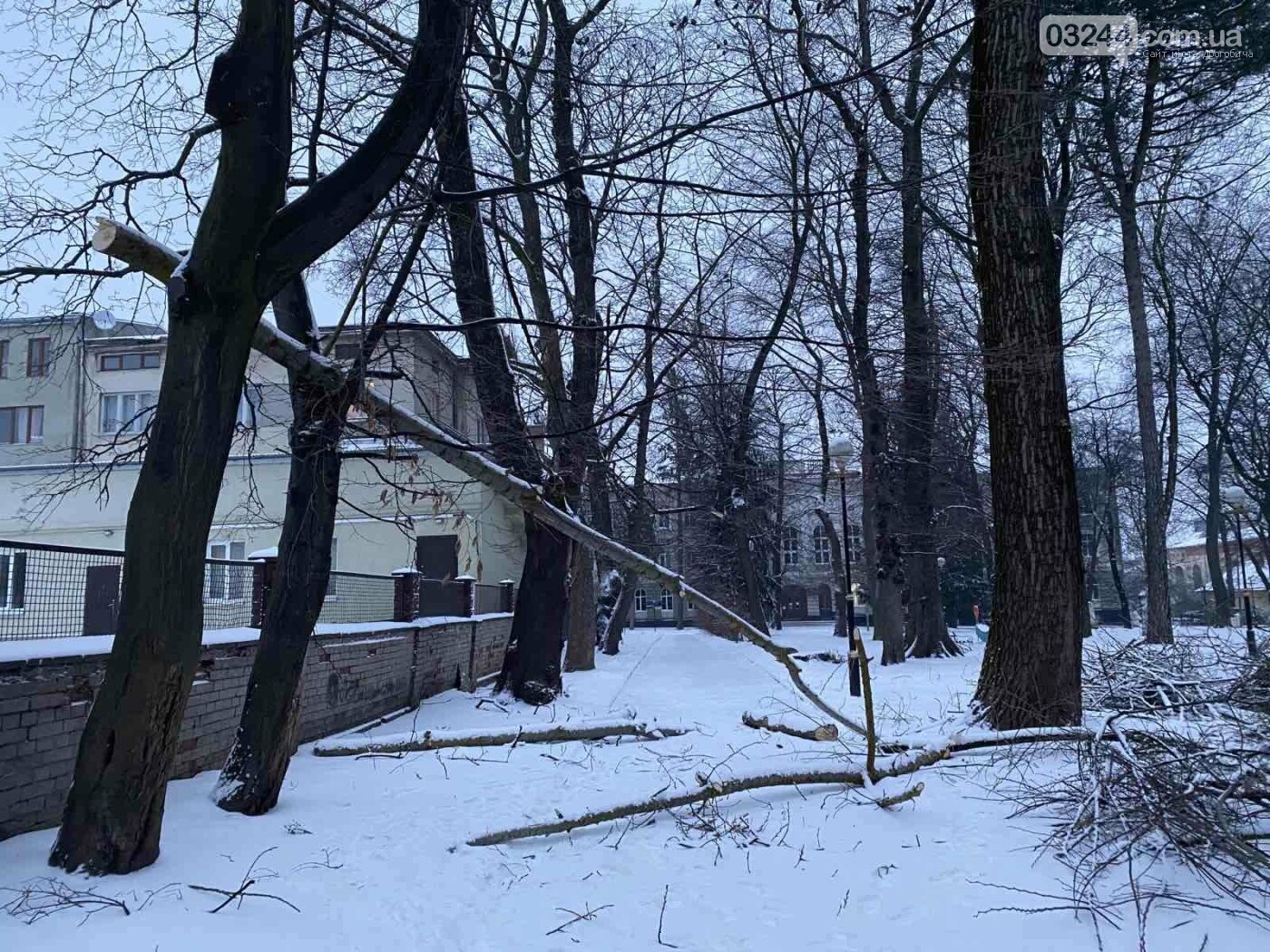 """Фото дня: в парку педуніверситету над алеєю """"повисло"""" дерево, фото-5"""