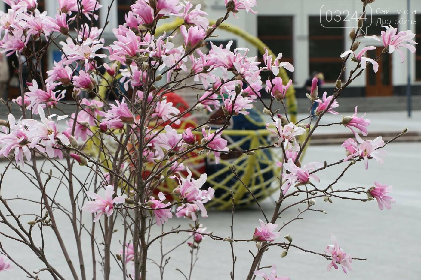 У Бориславі писанкове дерево, в Трускавці – великодній кошик, у Дрогобичі – писанки: міста чепурять до Великодня, фото-10